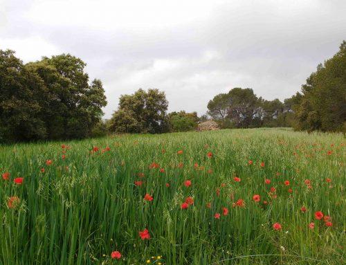 La loi de création de l'Agence de la nature de Catalogne, quarante jours plus tard
